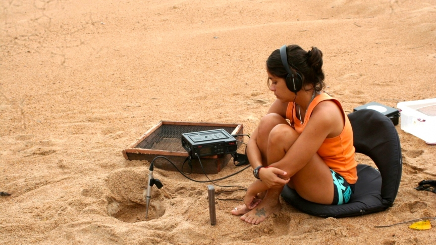 Camila Ferrara of the Wildlife Conservation Society records the sounds from South American river turtles on the beach before they even hatch from their eggs.