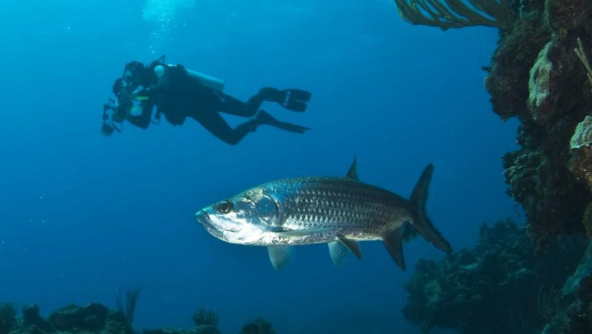 Researchers discover tracking fish can provide better data