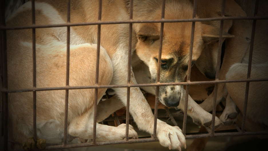 Dog Thief Down: Pet lovers turned vigilantes in Vietnam