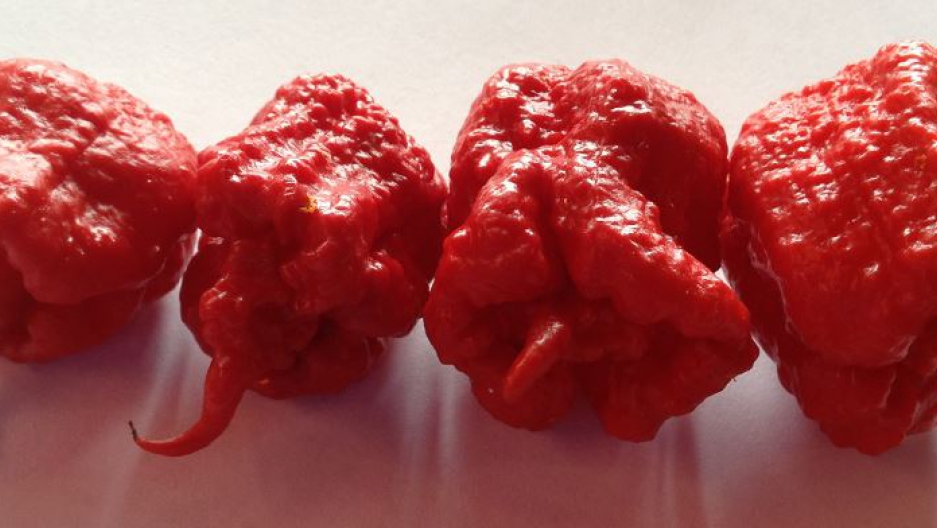 Carolina Reapers peppers