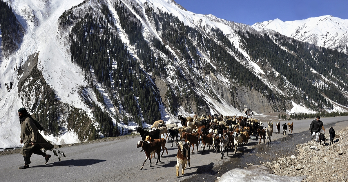 Kashmiri nomads walk with their herd of goats and sheep on a mountainous road after the Srinagar-Leh highway 55 miles east of Srinagar, the capital of Indian Kashmir, May 2, 2011.</p>
