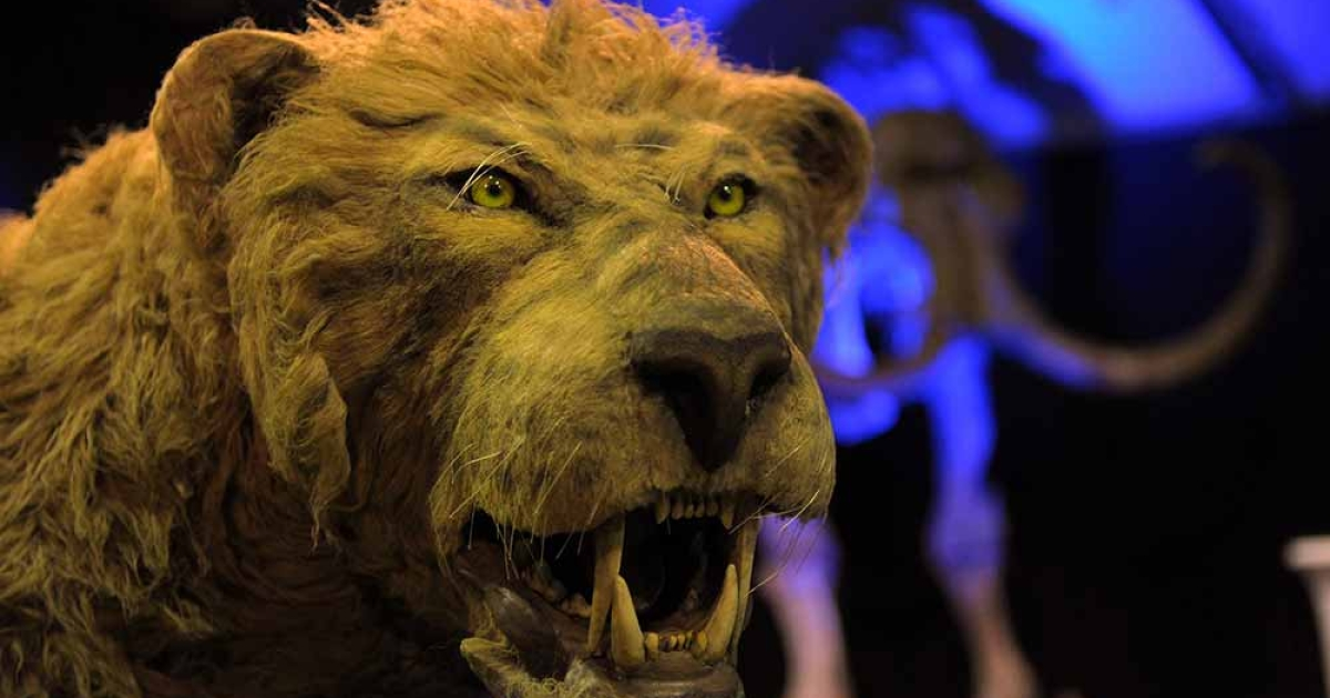 A replica of an Ice Age lion is seen during the 'Giganten Der Eizeit' exhibition opening on May 31, 2011 in St Peter-Ording, Germany. A new hypothesis suggests that the Ice Age ended because of a wobble in Earth's axis.</p>