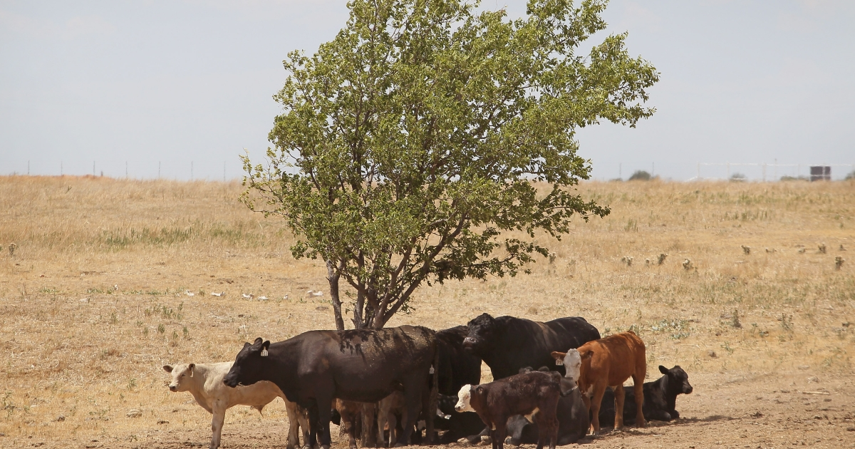 Experts say that drought claimed 300 trees in Texas last year.</p>