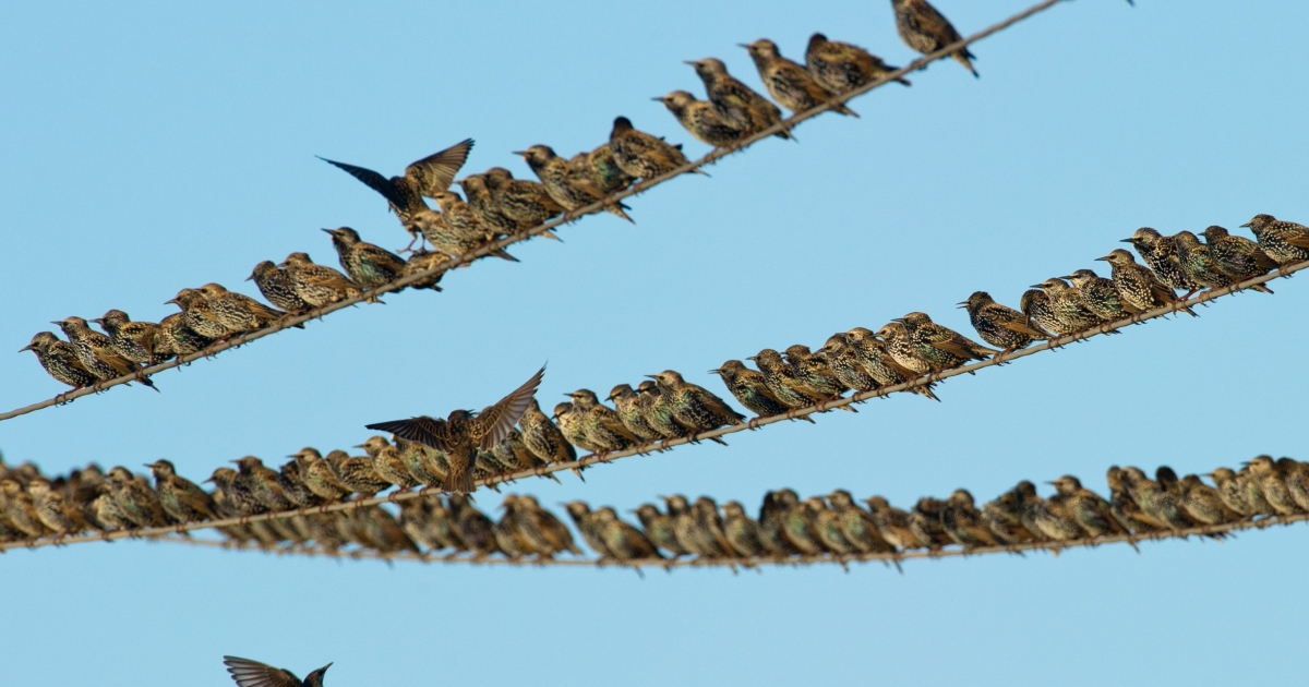 Scientists say that some birds are changing their migration patterns to deal with climate change.</p>