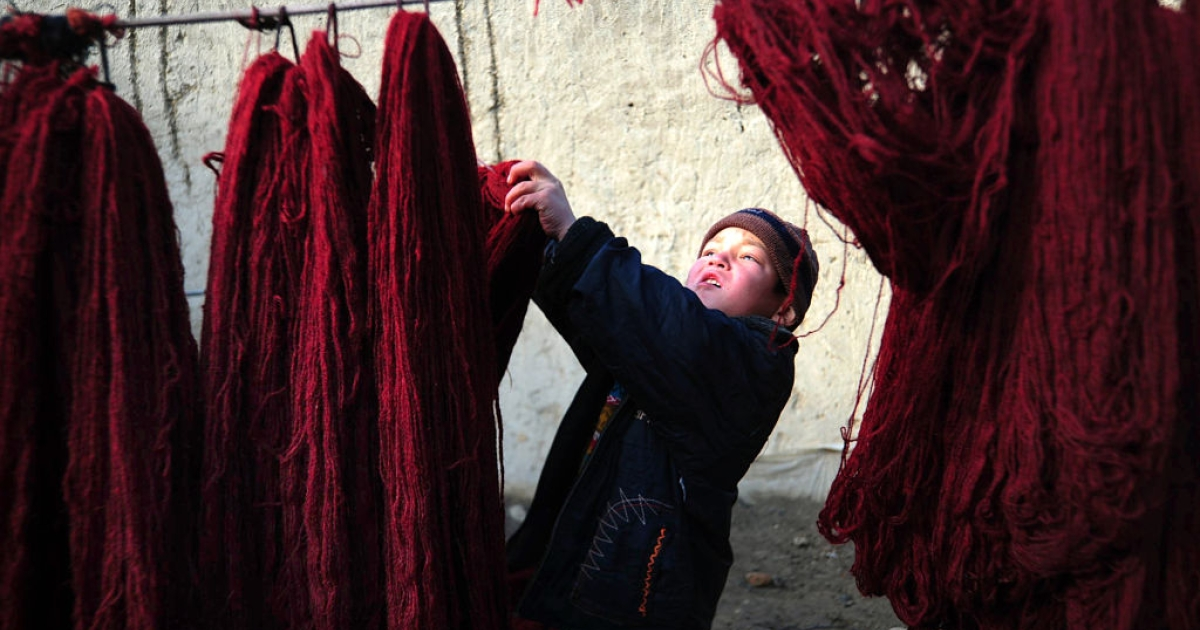 An Afghan child hangs yarn to dry as he works at a home industry workshop in Mazar-i-Sharif on January 2, 2012. Some of the children work in the mornings and go to school in the afternoons. A single carpet may earn a family 12,000 to 13,000 Afghanis (242 to 262 USD) -- paid on completion -- but are usually sold for more in shops. UNICEF said in 2007 that a quarter of Afghan children aged between seven and 14 worked, despite legal and constitutional protection and Afghanistan being a signatory to the UN Convention on the Rights of the Child.</p>