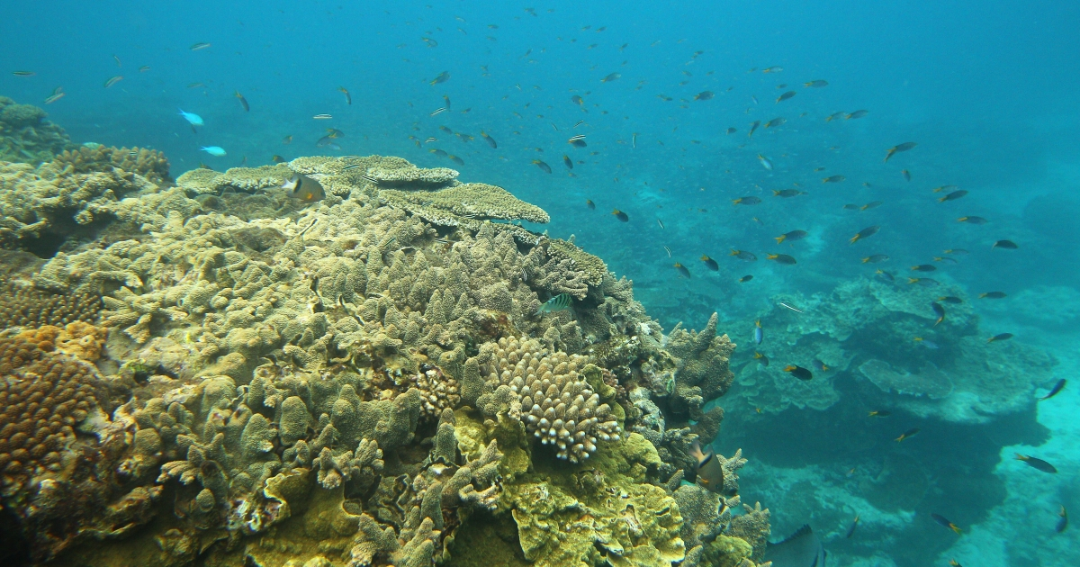 A new study suggests that 50 percent of the Great Barrier Reef has disappeared.</p>