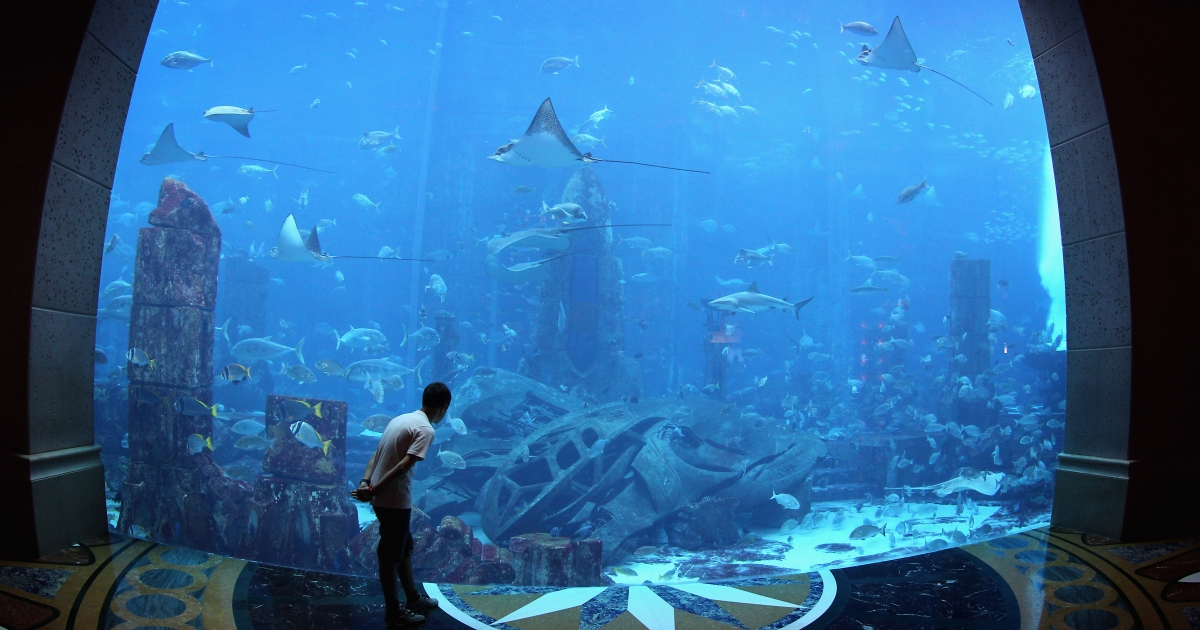 A young boy watches the fish in the giant tank at Atlantis the Palm Hotel on February 23, 2012 in Dubai, United Arab Emirates.</p>