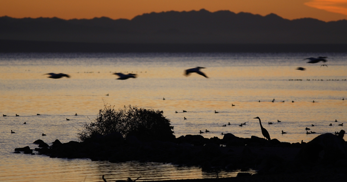 Pelicans fly over a great blue heron on the shore of the Salton Sea, the biggest lake in California, on March 21, 2012.</p>
