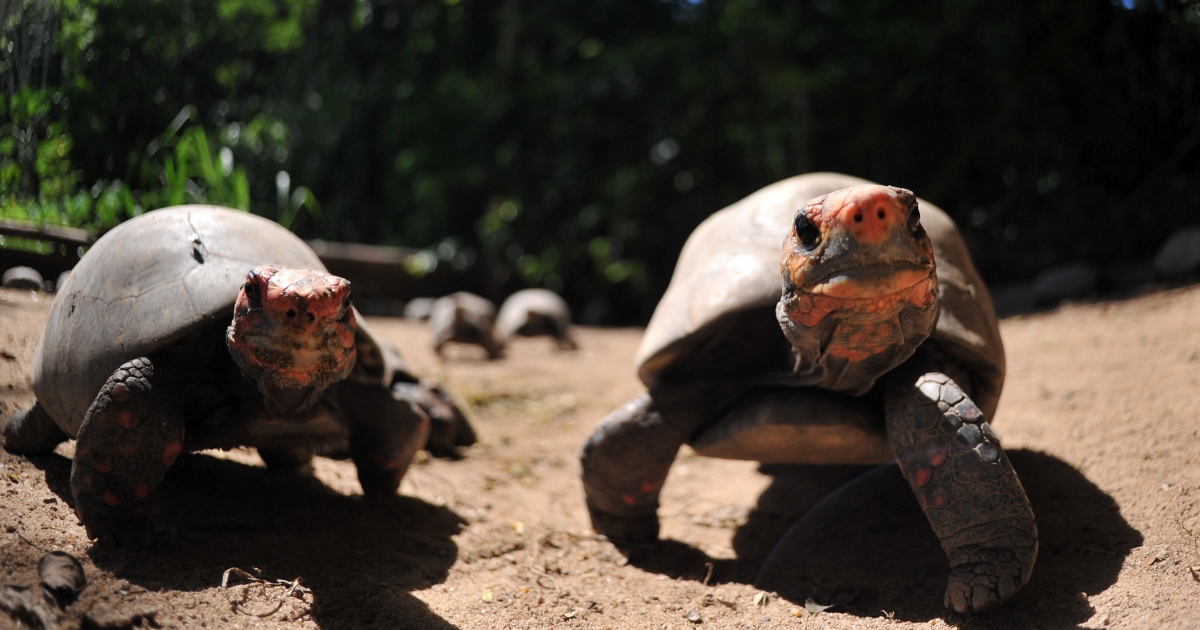 1600 turtles have escaped a Georgia farm and likely escaped export to China to become soup.</p>