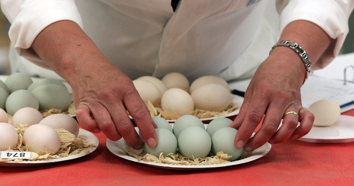 A new study shows that eggs are as dangerous for the arteries as smoking.</p>