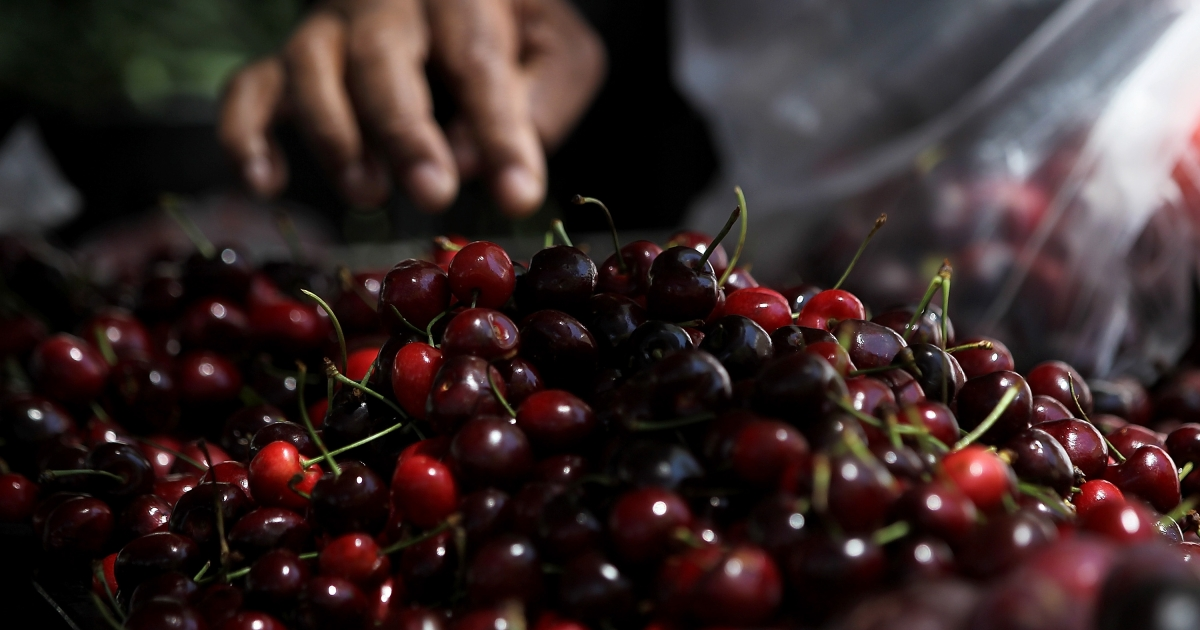 A new study has shown that the risk of gout is significantly reduced by eating cherries.</p>