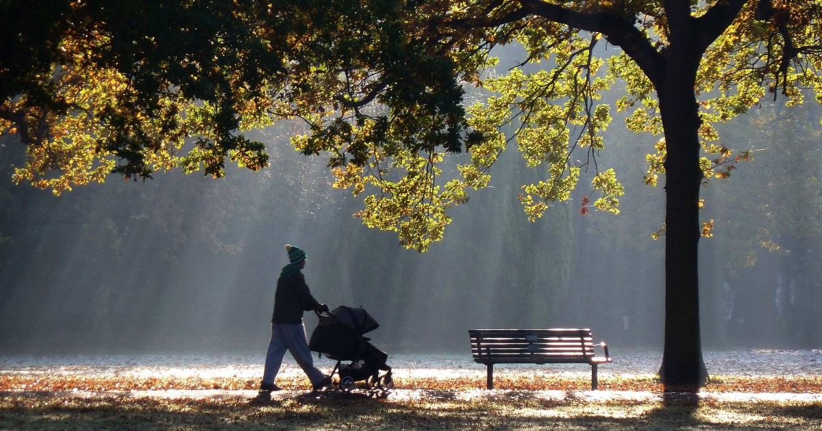 A man pushes a child's buggy through shafts of dappled light in Walpole Park in Ealing on November 11, 2012 in London, United Kingdom.</p>