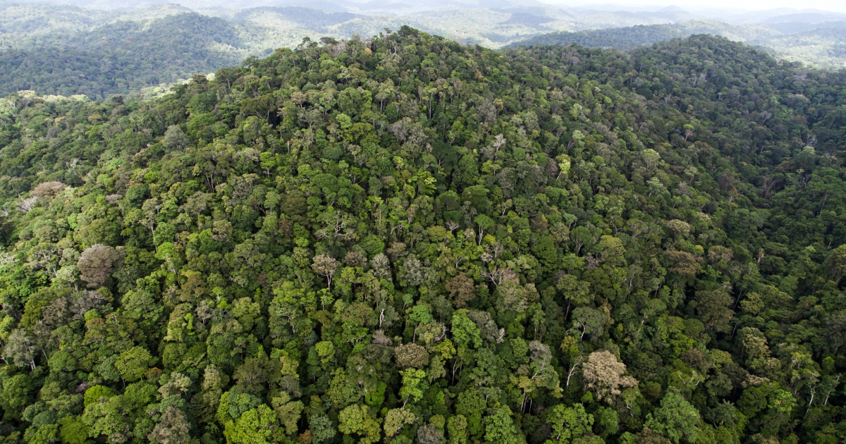 The Amazon rainforest is feeling the effects of climate change through a massive drought.</p>