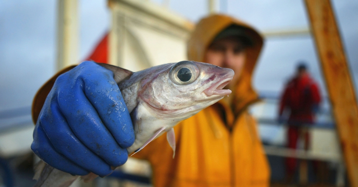 A report by the NOAA says that six fish stocks have returned to healthy levels off the US coast.</p>