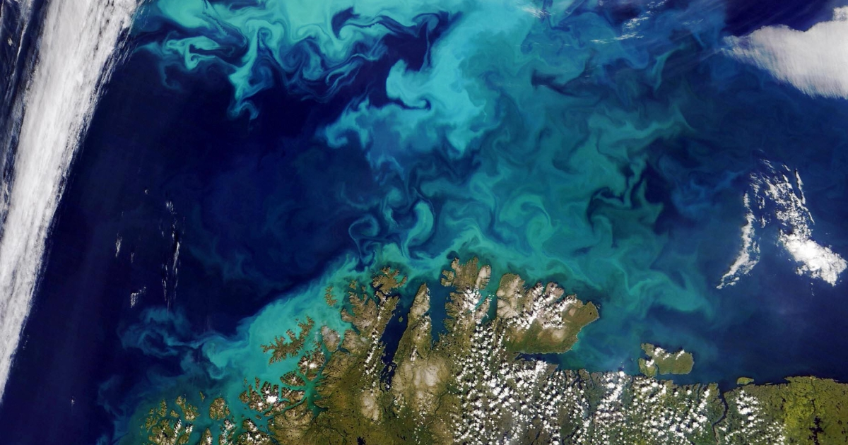 Scientists discover the reason behind blooming ocean plankton in the North Atlantic.</p>