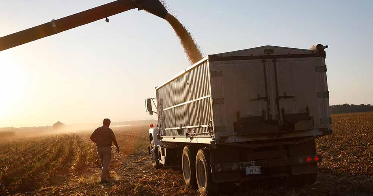 Bill Raben loads a grain truck as he helps to harvest corn on land he farms with his brother October 4, 2008 near Carmi, Illinois.</p>