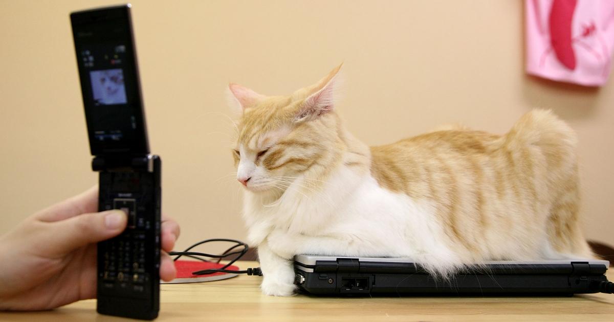 Cat film festival in Minnesota sees felines take center stage.</p>