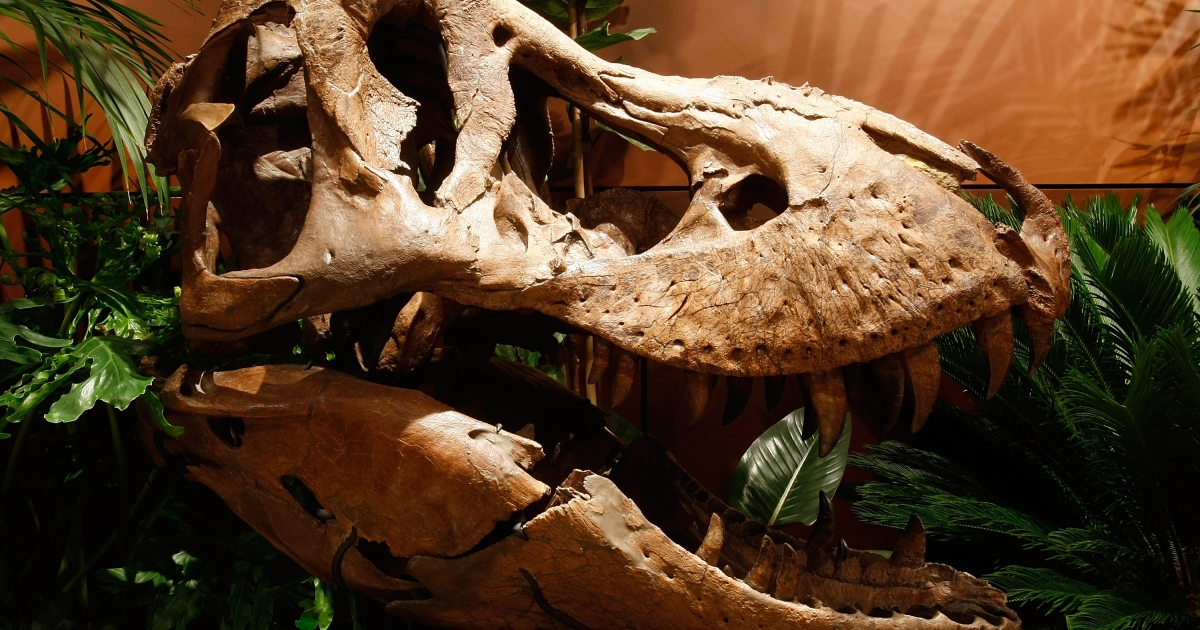 The federal government is suing to have a dinosaur sent back to Mongolia after it was brought over to the US on false grounds.</p>
