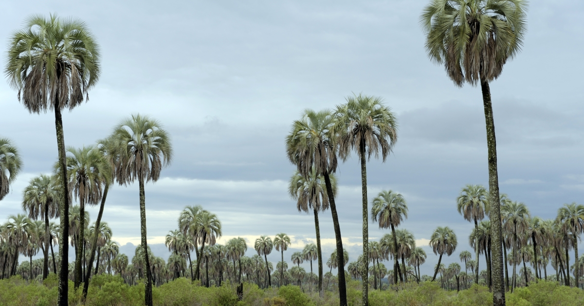 A new study says that Antarctica was once covered in palm trees.</p>