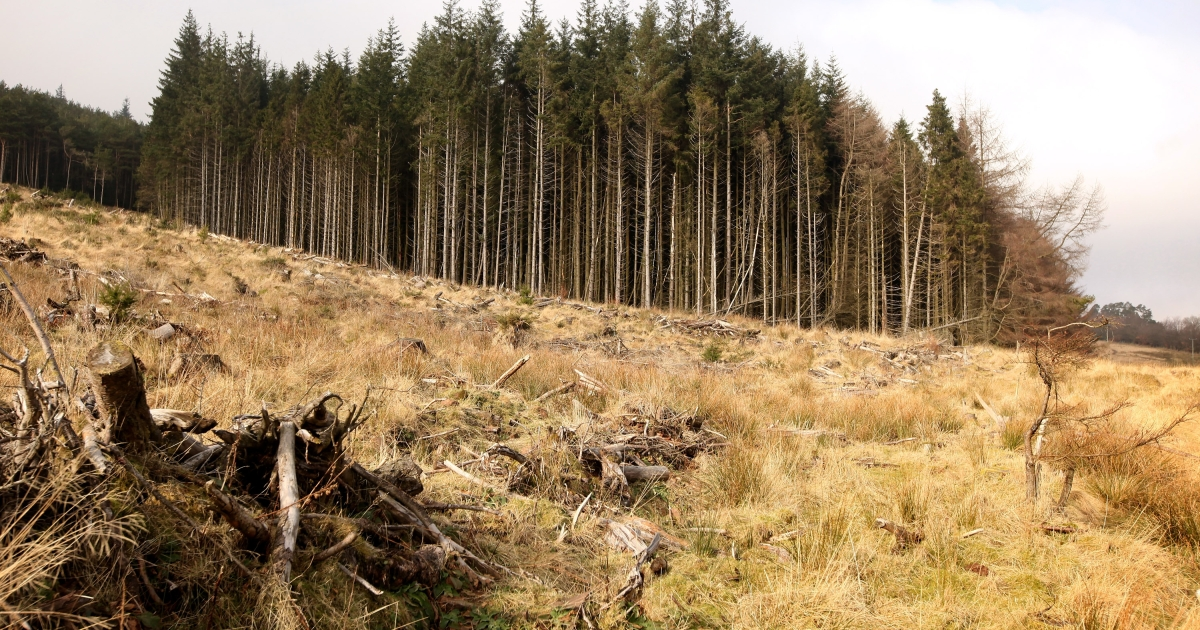 A new report by the Union of Concerned Scientists links eating meat with deforestation.</p>