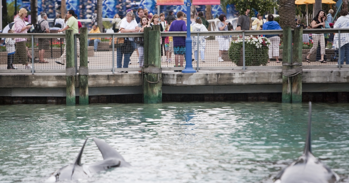 Guests watch a killer whale act at SeaWorld, in Orlando, Florida, in 2010.</p>