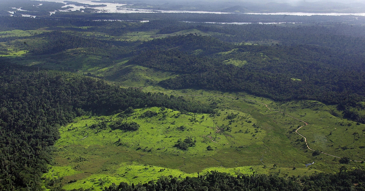 Google cameras see trees of green: the Amazon rainforest.</p>