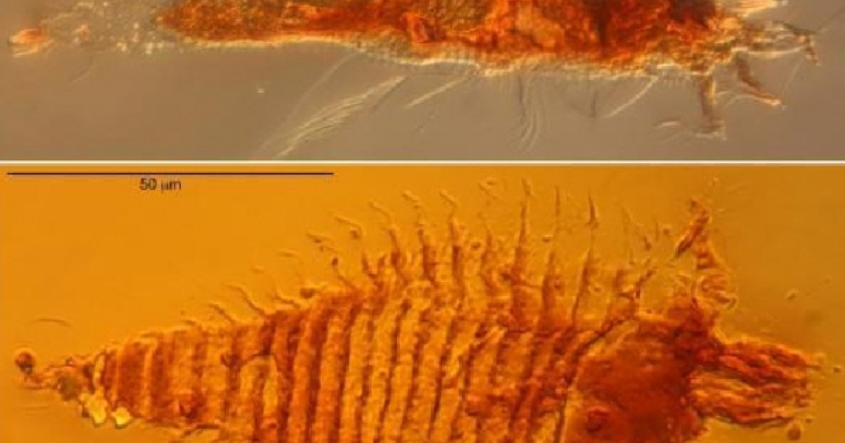 The world's oldest fossils of mites were found in Italy recently and said to be about 230 million years-old.</p>
