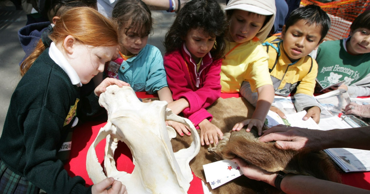 Schoolchildren inspect a bear skull and hide at the San Francisco Zoo. Scientists recently discovered four perfectly preserved prehistoric bear skulls in underwater caves in Mexico.</p>