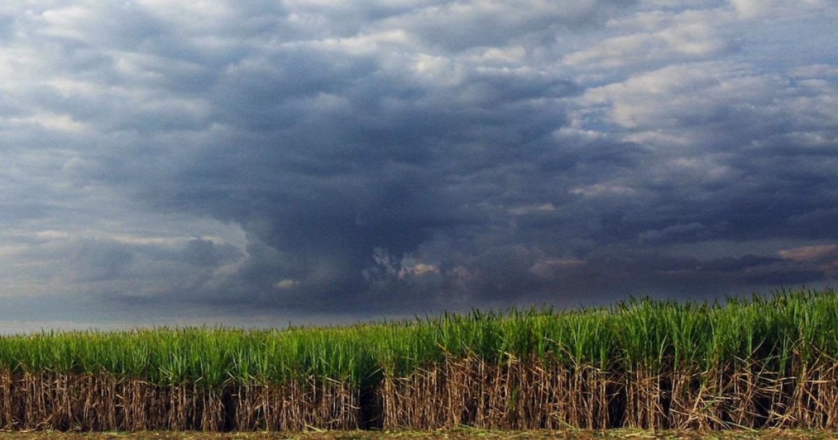 Sugarcane plantation in Sertaozinho, Brazil.</p>