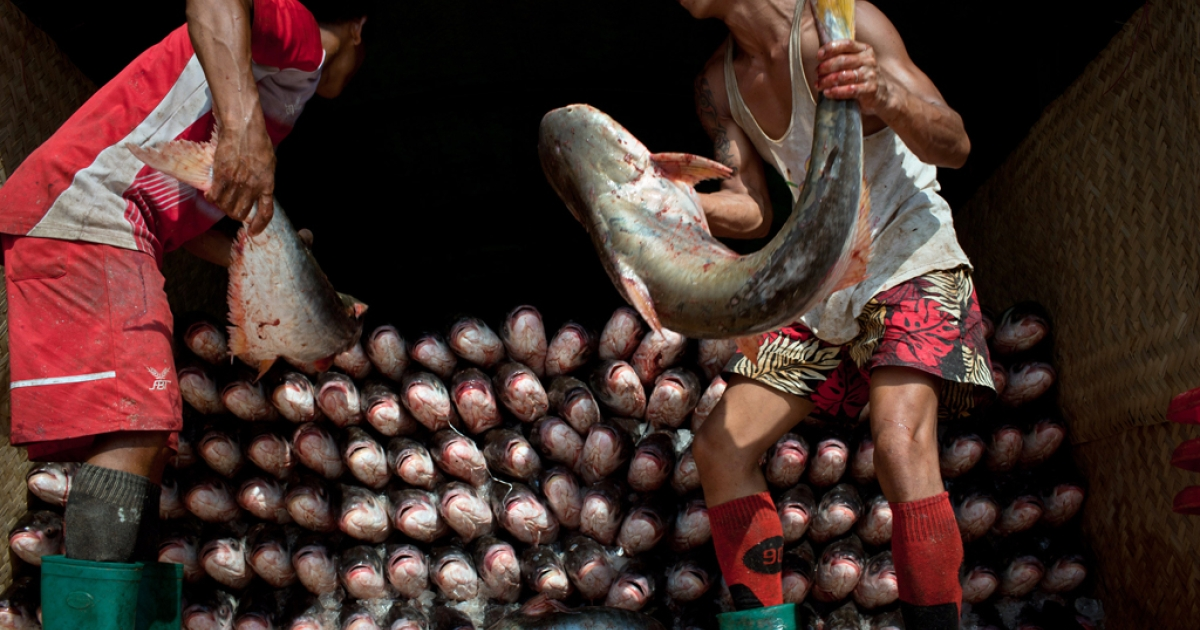 Burmese men work on the docks of the San Pya fish market on Dec. 9, 2010 in Rangoon, Burma.</p>