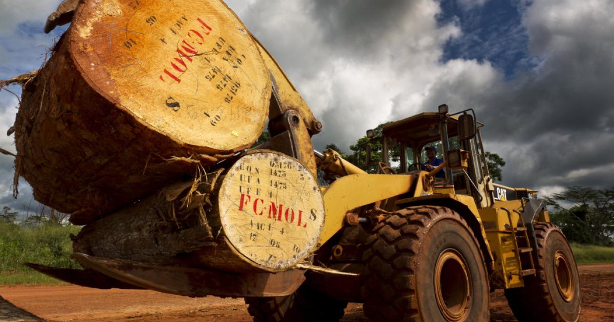 Sustainable logging work on Jun. 7, 2010 in Kika, Cameroon.</p>