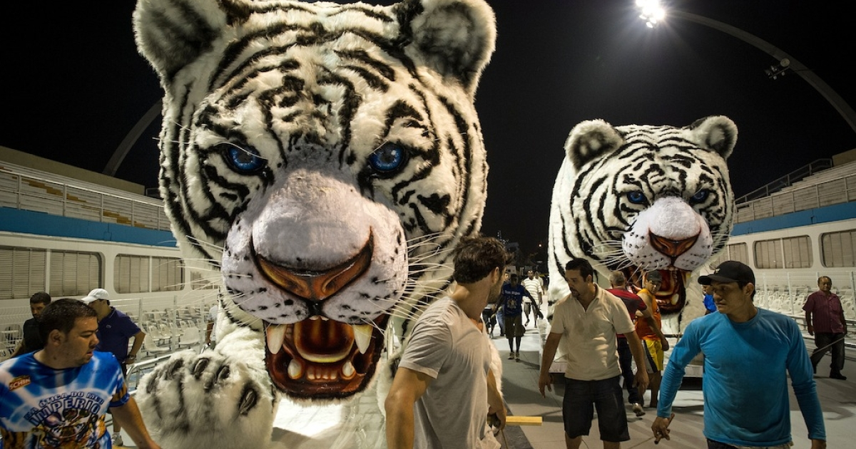 Members of the Império da Casa Verde samba school move their floats portraying white tigers to the starting position at the Sambódromo two days before the Samba Carnival in São Paulo, Brazil, on February 15, 2012.</p>