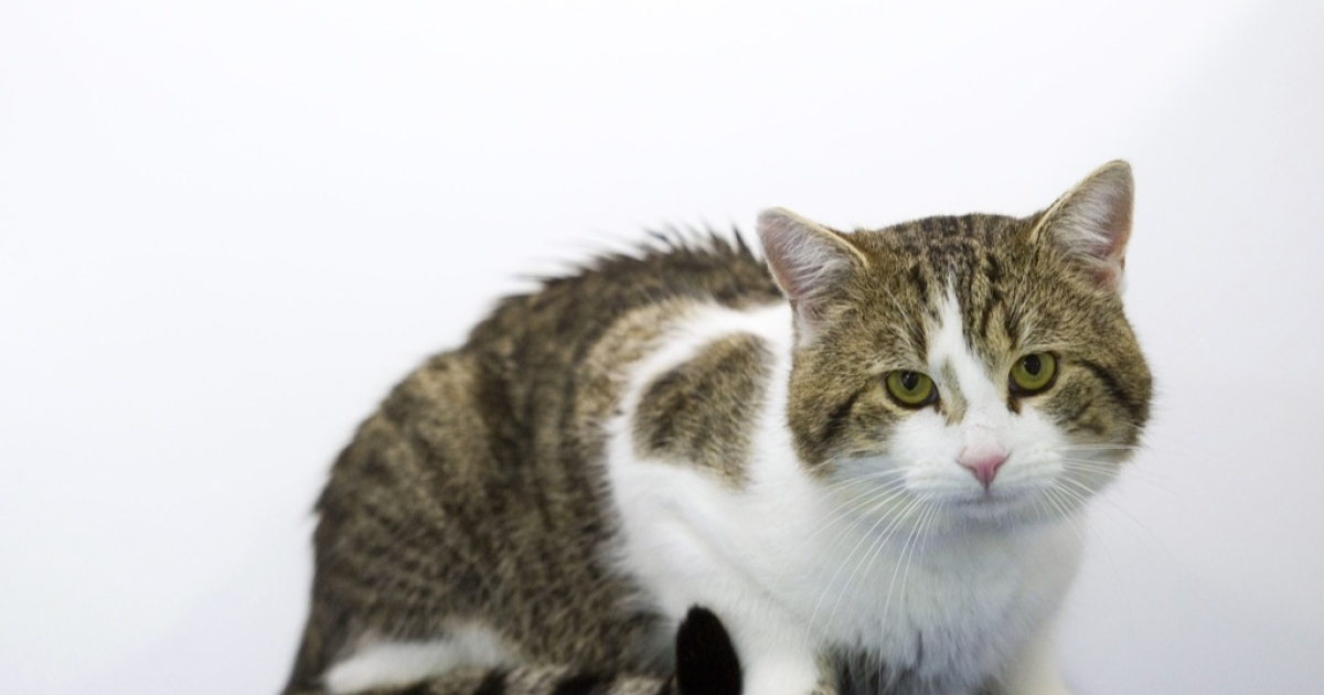The cat was taken to the vet for a routine flea bath was put to death.</p>