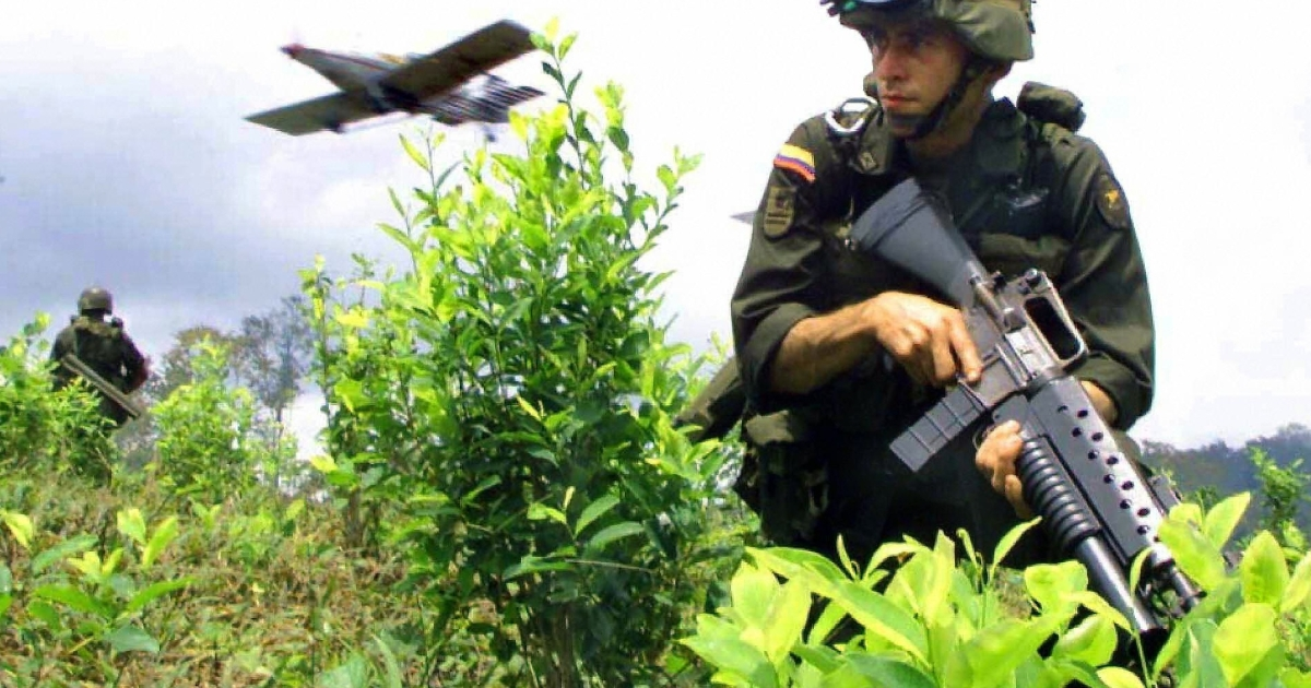 Why are we here? A Colombian soldier sits in a field of coca leaves.</p>