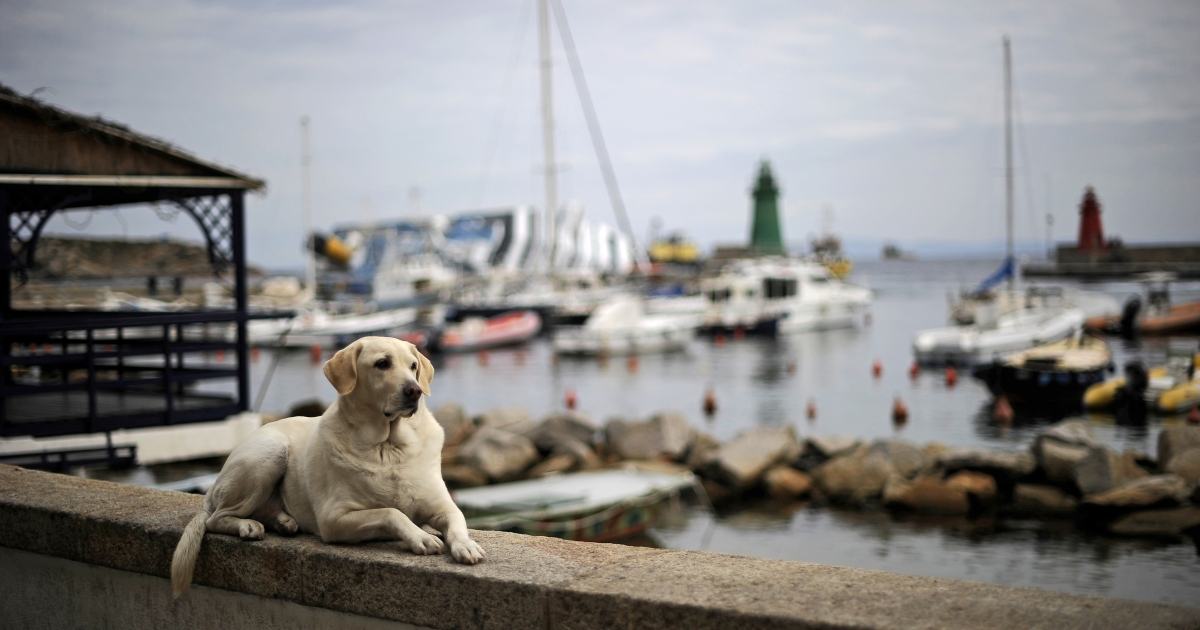 A dog lies on a small wall as the stricken cruise liner Costa Concordia lies aground in front of Giglio Island on Jan 27.</p>