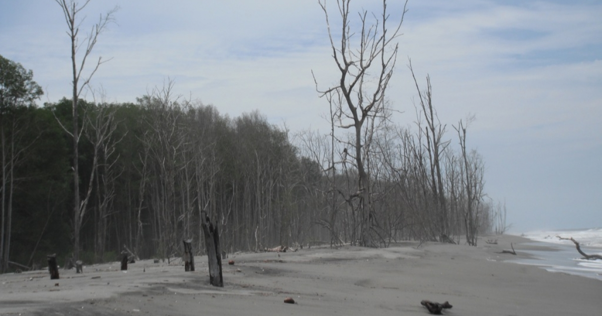 Dead mangrove trees jut out of the encroaching sand in La Tirana, El Salvador.</p>