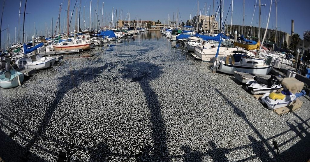 Experts believe a lack of oxygen resulted in millions of dead anchovies floating in a marina in Los Angeles, California last March.  The International Programme on the State of the Ocean (IPSO) reported that human pollution and overfishing are two of many factors leading to the depletion of marine life at a faster rate than previously estimated.</p>