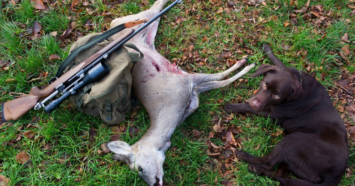 A hunter's weapon lies against a slain deer next to a dog near in the eastern German city of Sieversdorf on Nov. 20, 2010. The month of November is the main hunting period in the region.</p>