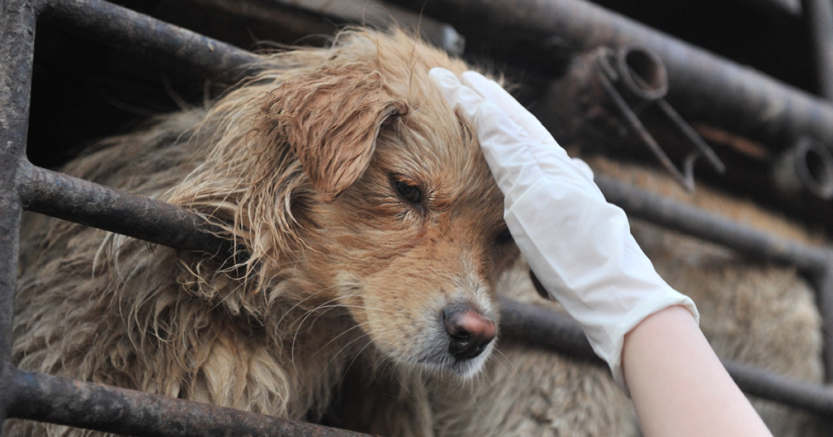 An animal lover consoles a dog after a convoy of trucks carrying some 500 dogs to be sold as meat was stopped on a highway in Beijing on April 17, 2011.</p>