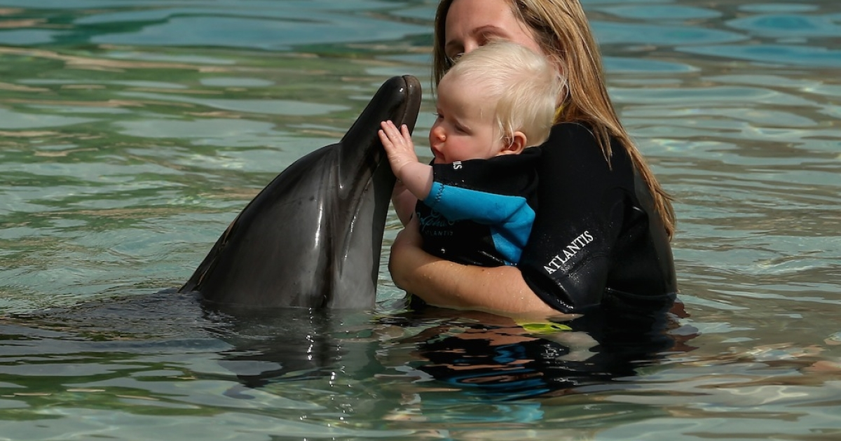 A woman and her baby swim with a dolphin at Dolphin Bay, Atlantis on Nov. 21, 2012 in Dubai, United Arab Emirates.</p>