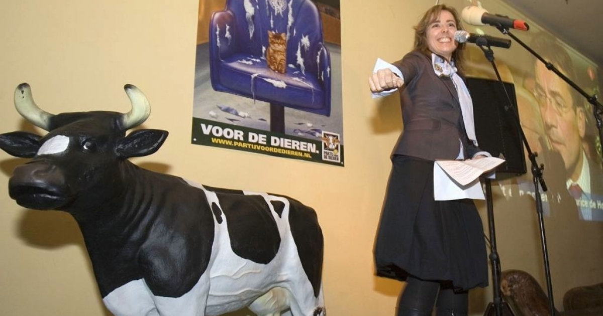 The Dutch Party for the Animals leader Marianne Thieme gained two seats in parliament on November 22, 2006. The party has now proposed a bill to ban the slaughter of livestock without stunning, or anesthetizing, outraging Jews and Muslims in Netherlands.</p>