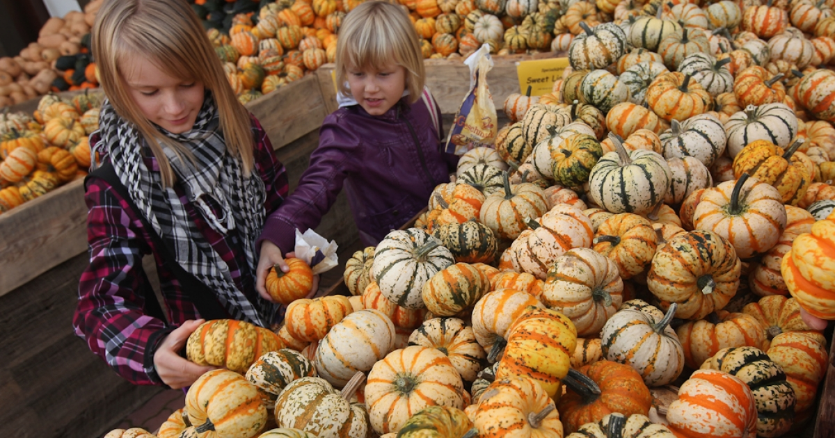 Stella (L), 10, and her sister Maike, 8, choose from Festival pumpkins at the Buschmann and Winkelmann pumpkin farm in Beelitz, Germany. Oct. 9, 2011.</p>