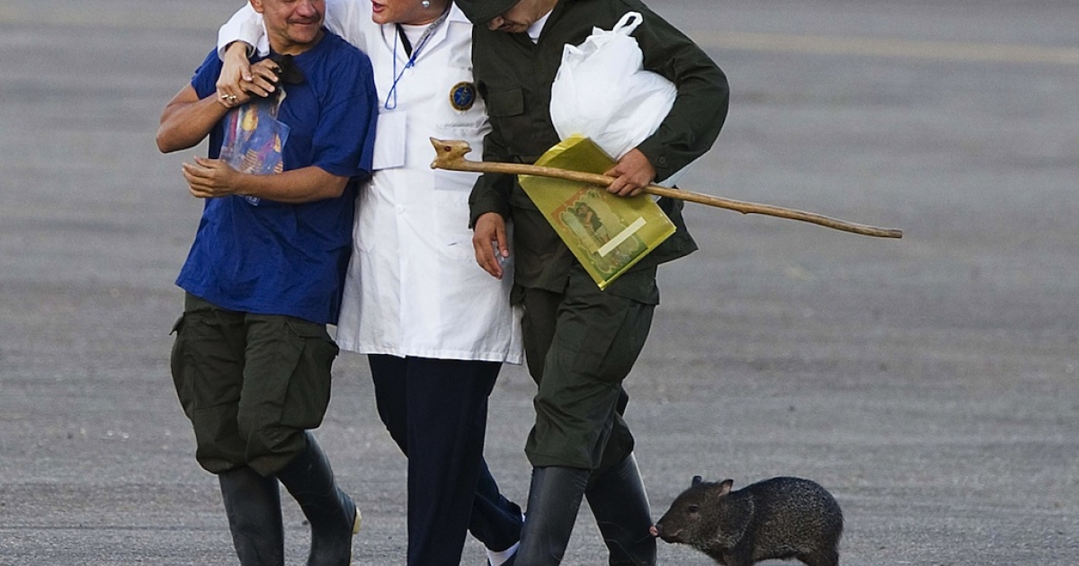 Former FARC hostages (L and R) arrive with a peccary in Villavicencio, Colombia on April 2, 2012, after being liberated. The leftist Revolutionary Armed Forces of Colombia (FARC) rebels freed 10 police officers and soldiers held hostage for up to 14 years.</p>