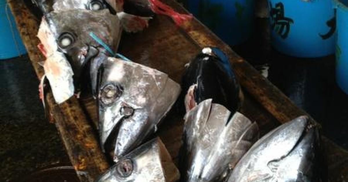 Fish heads at Tokyo's Tsukiji market, the biggest fish market in the world.</p>