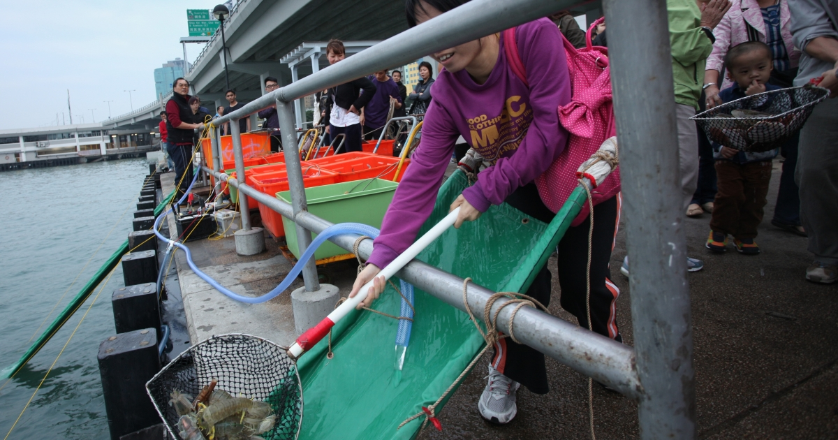 A woman joins a group of Buddhists to release unsold shellfish from Hong Kong's local markets into Victoria Harbour on Dec. 4, 2010. It is believed that