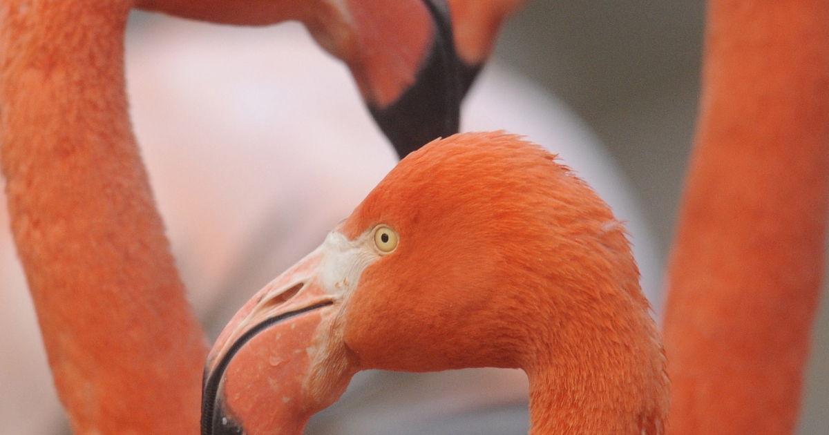 At least 55 flamingos were found dead in a zoo outside Paris due to the freezing weather.</p>