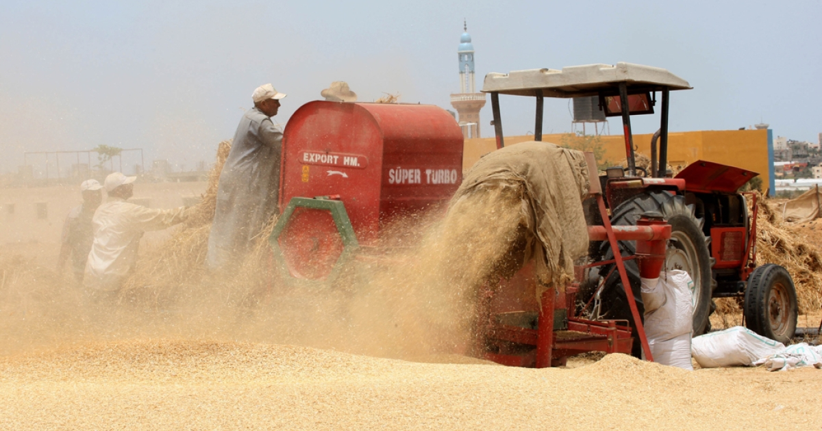 Palestinian farmers load a combine harvester with wheat during the annual harvest season in Rafah, near the Egyptian border, in the southern Gaza Strip on May 22, 2012.</p>