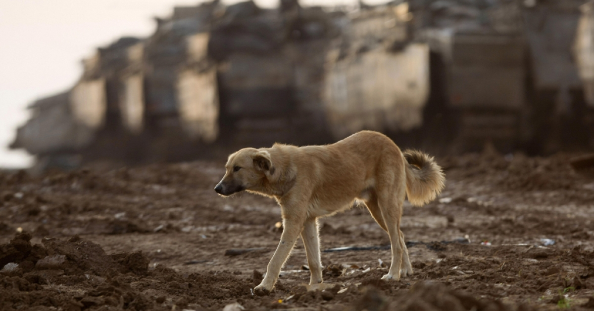 A dog walks near tanks in a deployment area on the Israeli side of the border with the Gaza Strip on Jan. 19, 2009. AFP PHOTO/MENAHEM KAHANA</p>