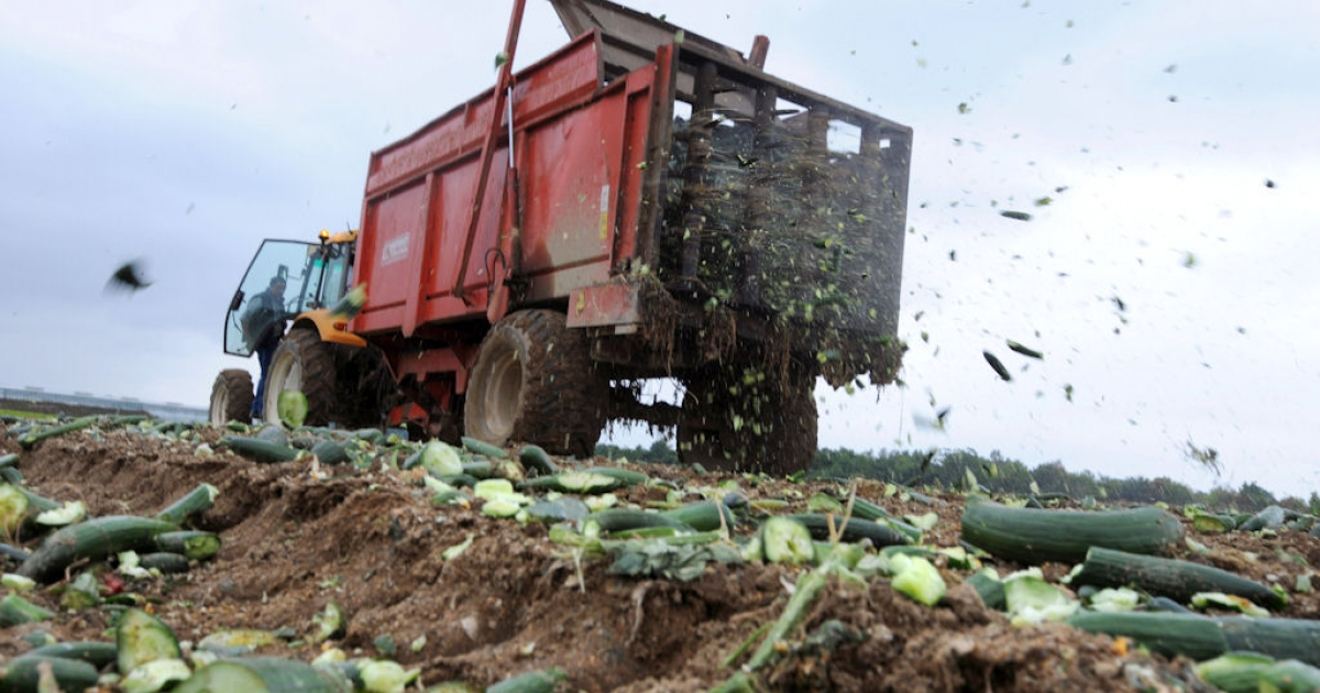 A tractor spreads destroyed cucumbers to fertilize a field, on June 06, 2011 in Carquefou, western France. Cucumbers sales collapsed on French markets due to the fear of E. coli contamination, even though the outbreak in Germany was eventually pinned on local sprouts.</p>