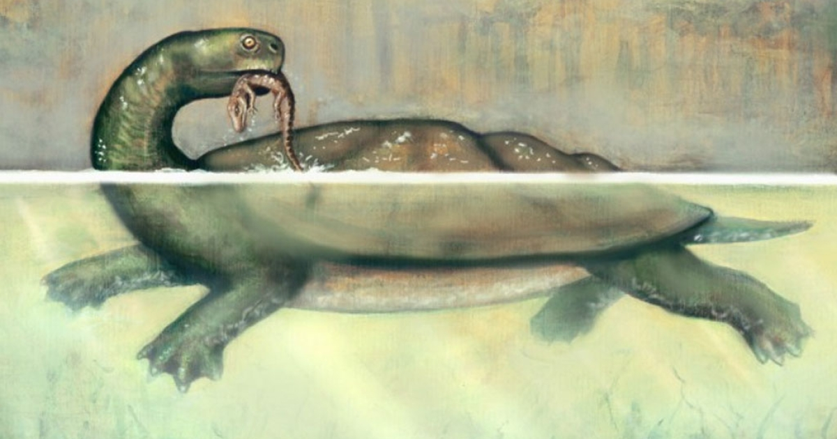 Fossils show giant turtles the size of cars that snacked on crocodiles.</p>